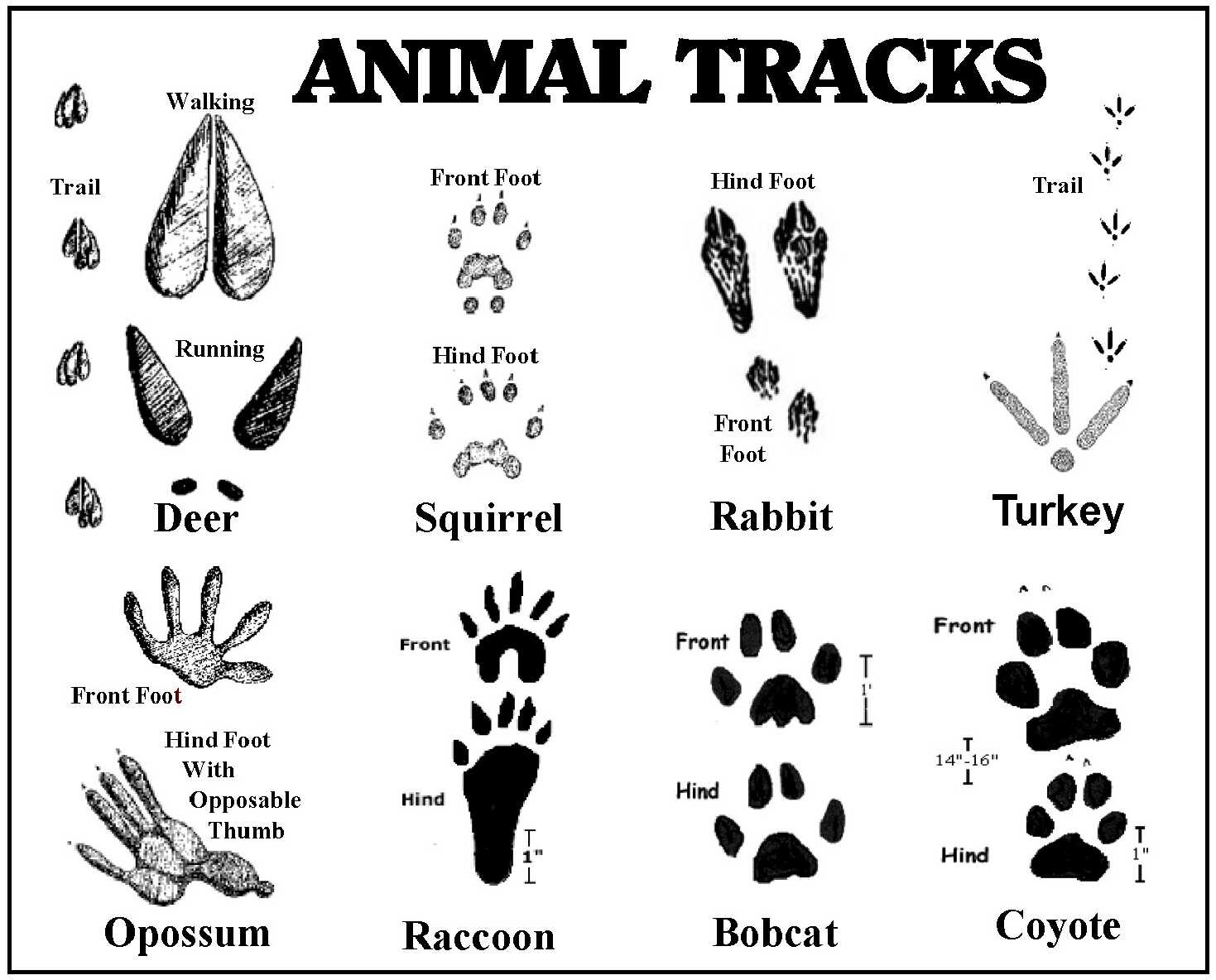Sassy Free Printable Animal Tracks