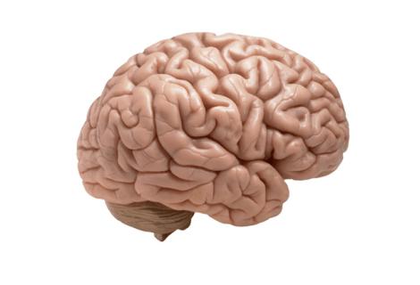 Memory techniques courses (EN/NL)