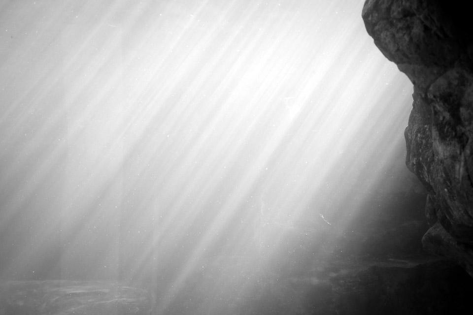 Aquatic Radiation by David Bernie