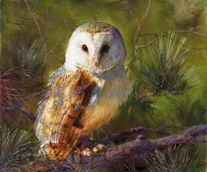 A Barn Owl Oil Painting (Tyto Alba)