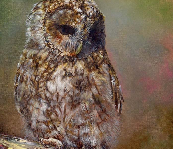 A Celebration of Nature-Tawny Owl Study