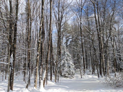 New England Snowy Woods