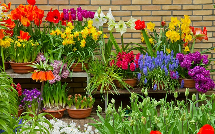 http://www.daviddomoney.com/2014/09/12/plant-grow-spring-flowering-bulbs-borders-containers/
