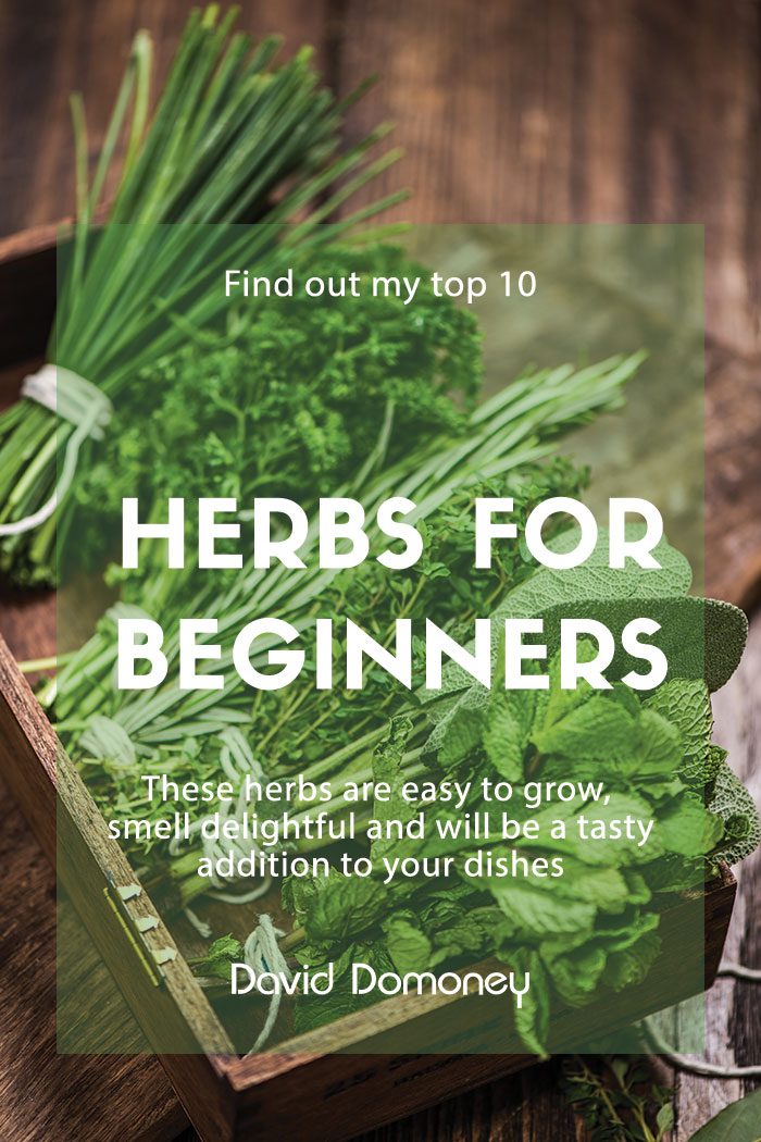 The 10 Best Herbs To Grow For Beginners David Domoney