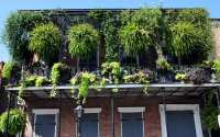 Urban gardening ideas: How to grow plants without a garden