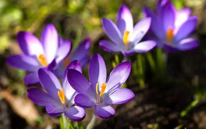 The Best Plants For Winter Garden Colour David Domoney