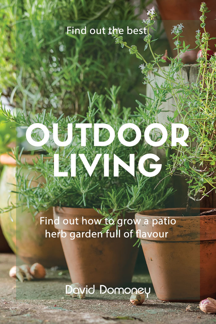 how to grow a patio herb garden for flavour
