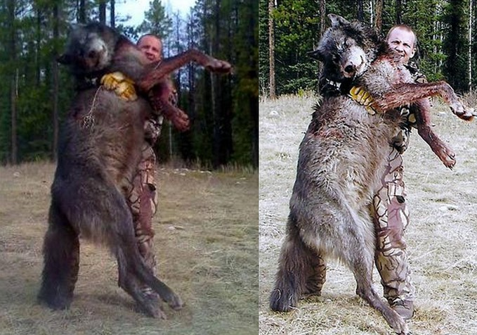 Timber Wolf Size