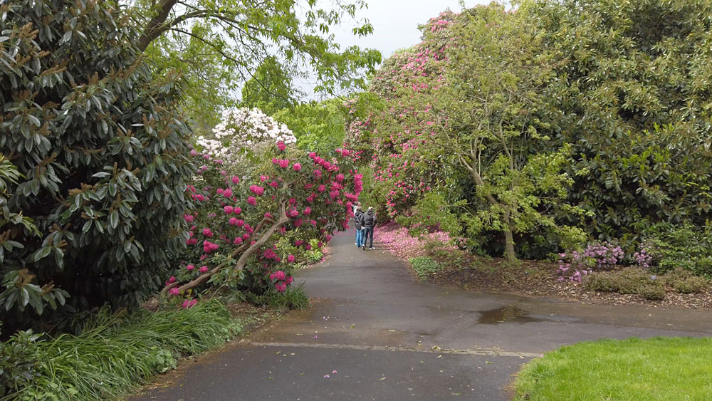 Kew Gardens Rhododendron Dell