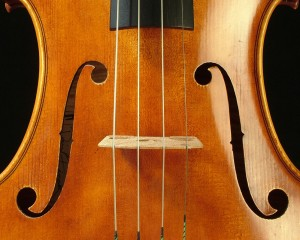 Viola by David Finc