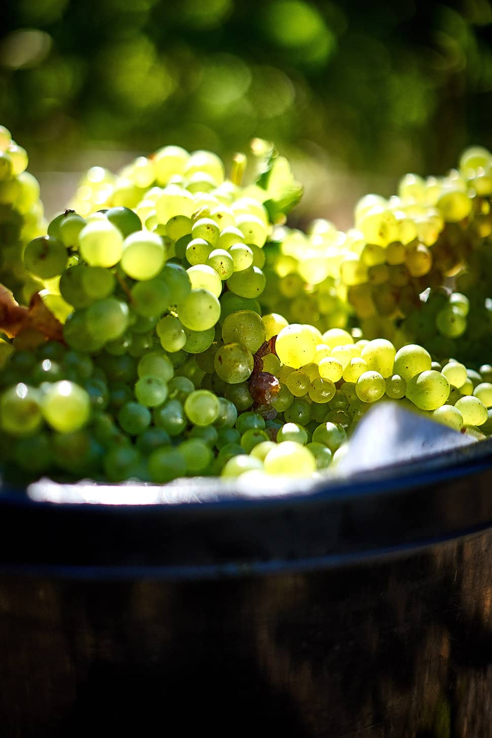 Watershed Wines David Griffen Food Photographer