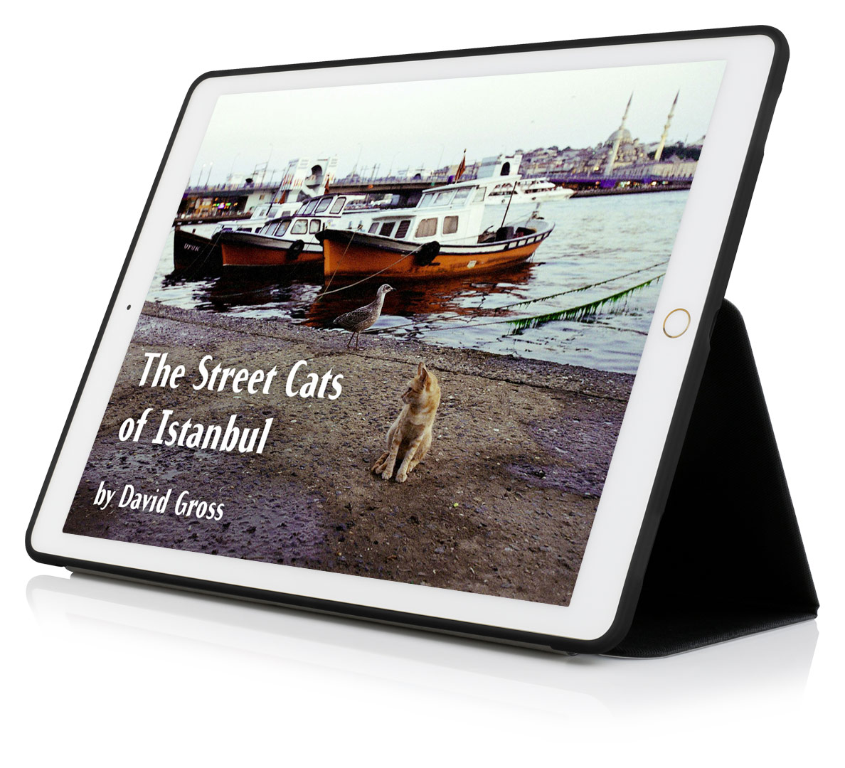 street-cats