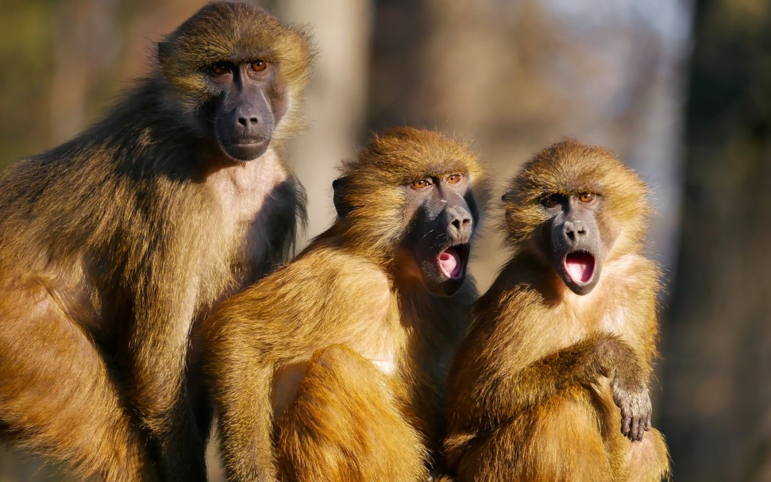 Si pagas con cacahuetes, tendrás monos