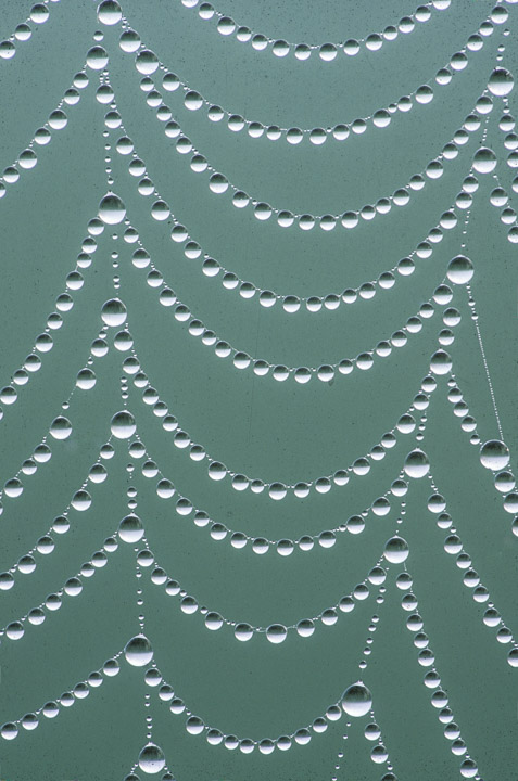 dew drop web