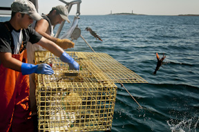 Lobstering in Gloucester, Mass.