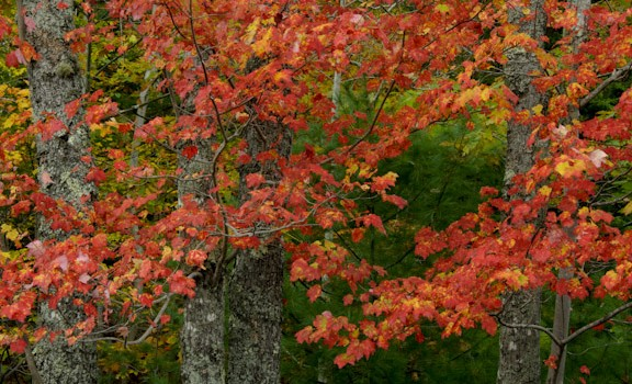 New England Fall Color Report