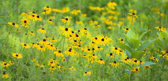 Forgotten Summer Fields