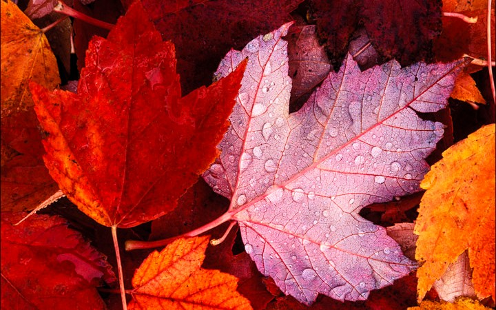 The Down and Dirty on Fall Photography