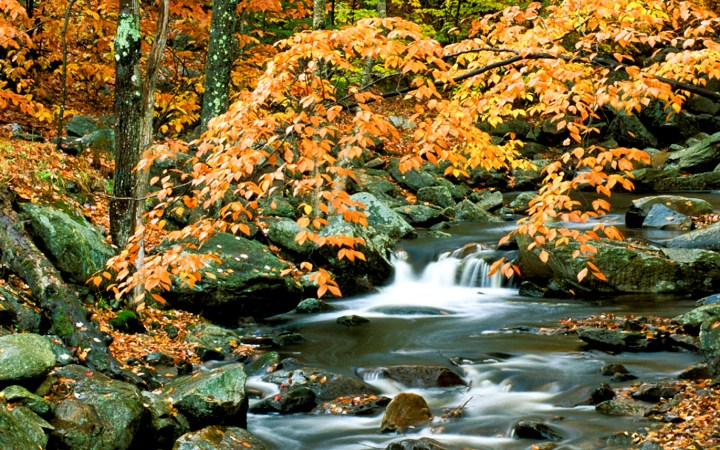Polarizer for Fall Colors