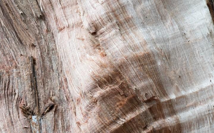 Inside Wood
