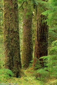 old-growth best