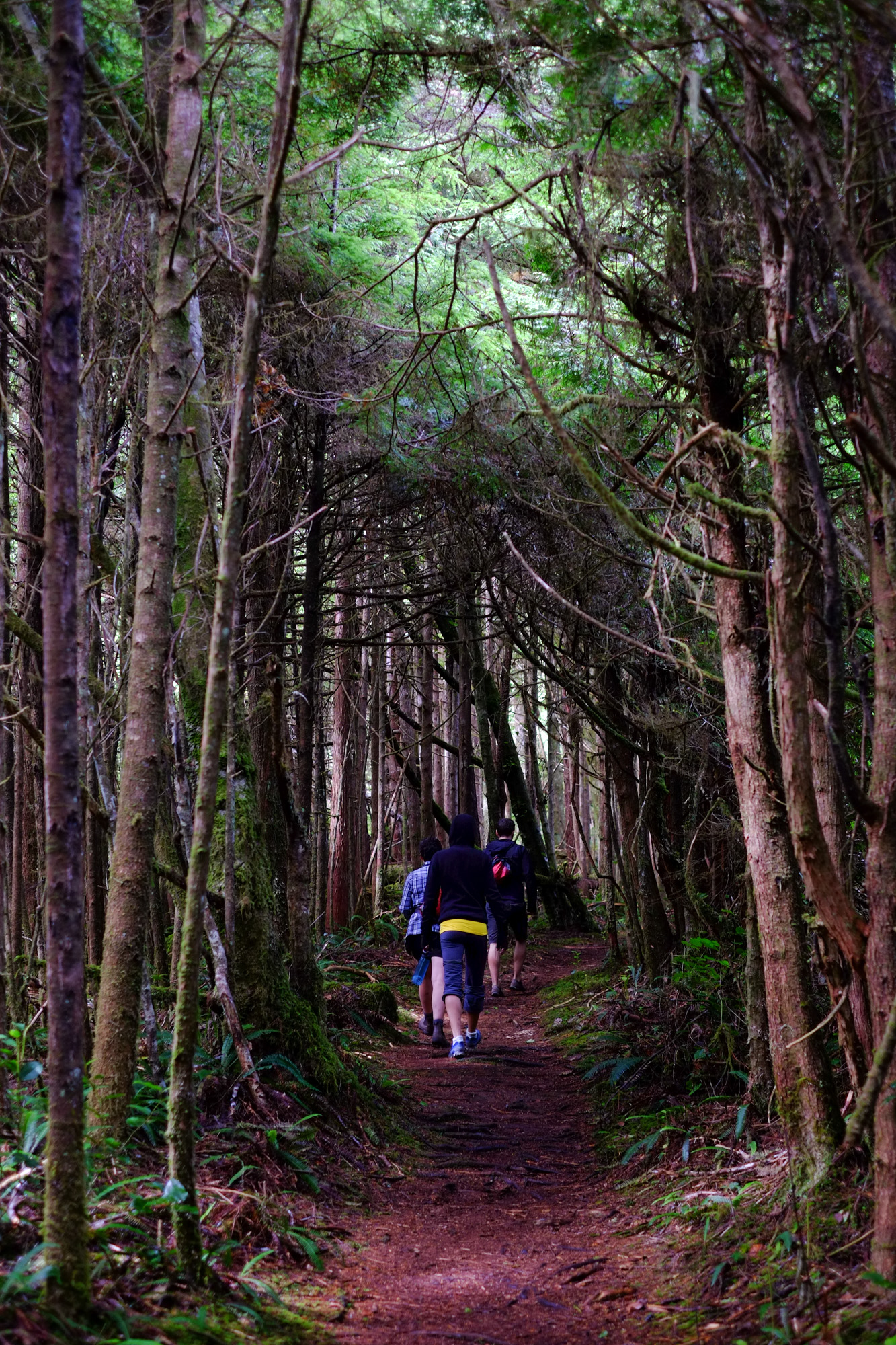 Hikers in the deep forest of the Cape Scott trail