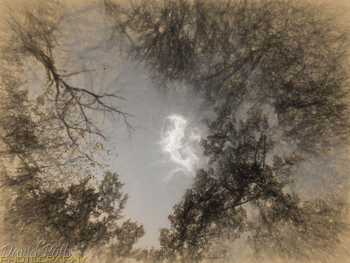 Werewolf Sky