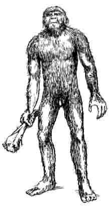 The ape-ancestry myth (2)