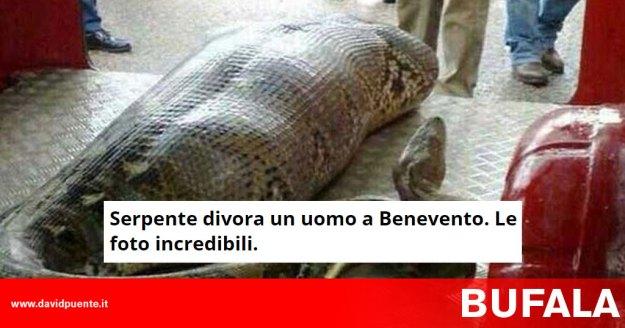 Bufala Serpente Divora Un Uomo A Benevento Le Foto Incredibili Il Blog Di David Puente