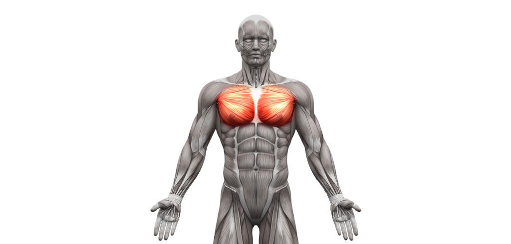 exercices pour muscler les pectoraux