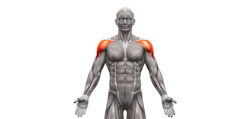 exercices-pour muscler les deltoïdes