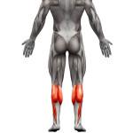 exercices-pour-muscler-les-mollets