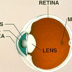 Parts Of The Eye Diagram And Function 4 Wire Outlet Anatomy How Works Davidson Associates Basic