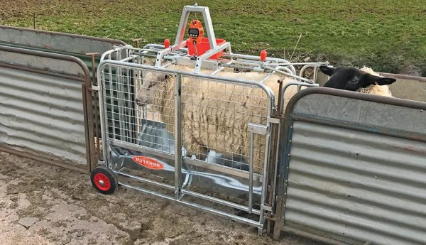 RITCHIE DIGITAL LAMB WEIGHER 3662G-0