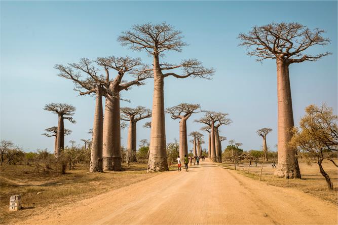 Madagaskar – alej baobabů [David Surý]