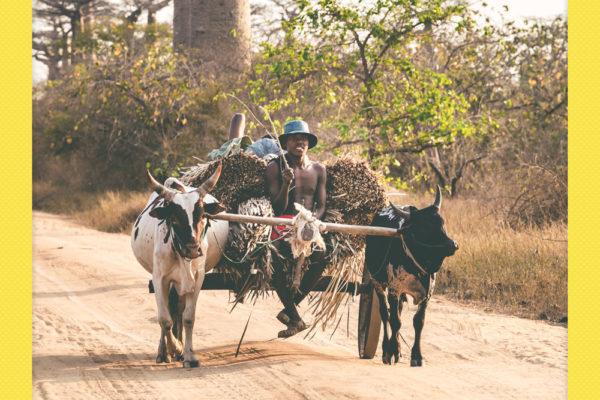 Madagascar_NikonD600_0349_20161008_polaroid