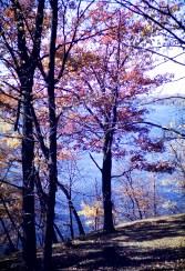 Autumn - Autumn Blue - Gale Farm