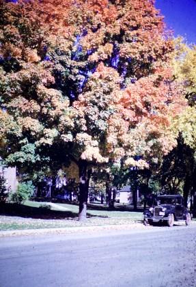 Autumn - Hutchinson