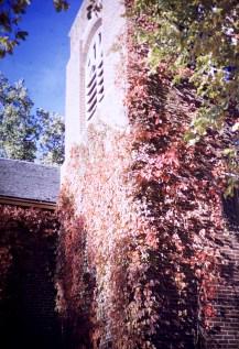 Autumn - Vines