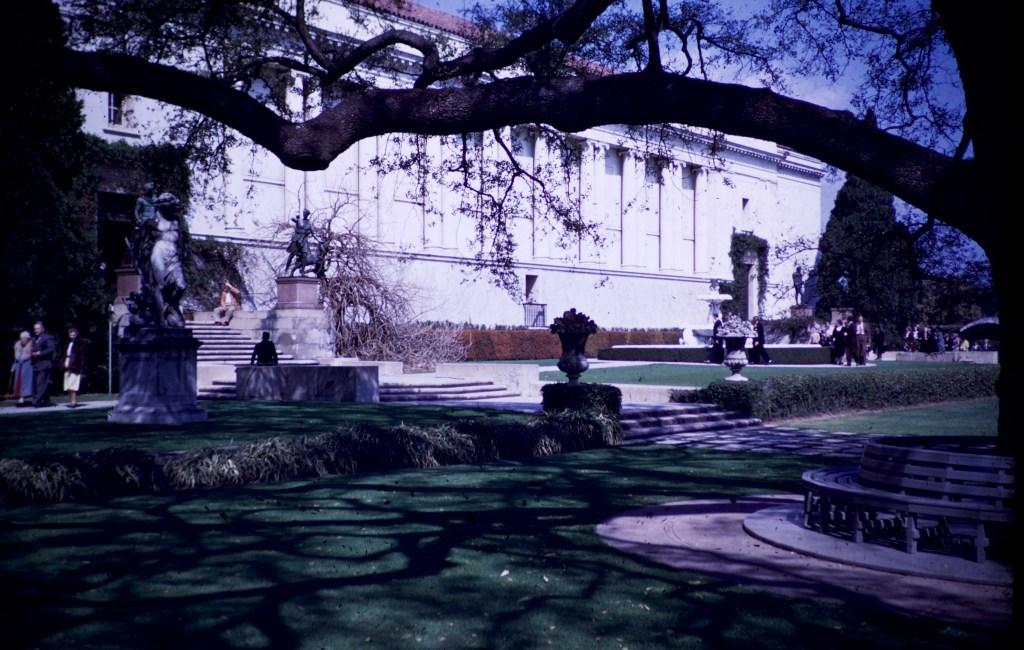 Huntington Library and Art Gallery – Mesa Oak