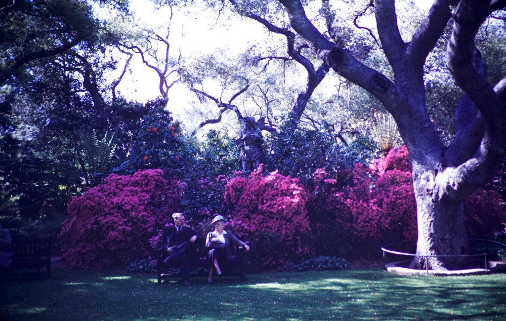 Huntington Library and Art Gallery – Rhododendron and Azalea