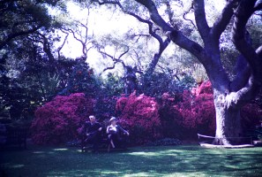 Huntington Library and Art Gallery - Rhododendron and Azalea