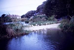 San Francisco - Flamingo - Fleischhacker Zoo