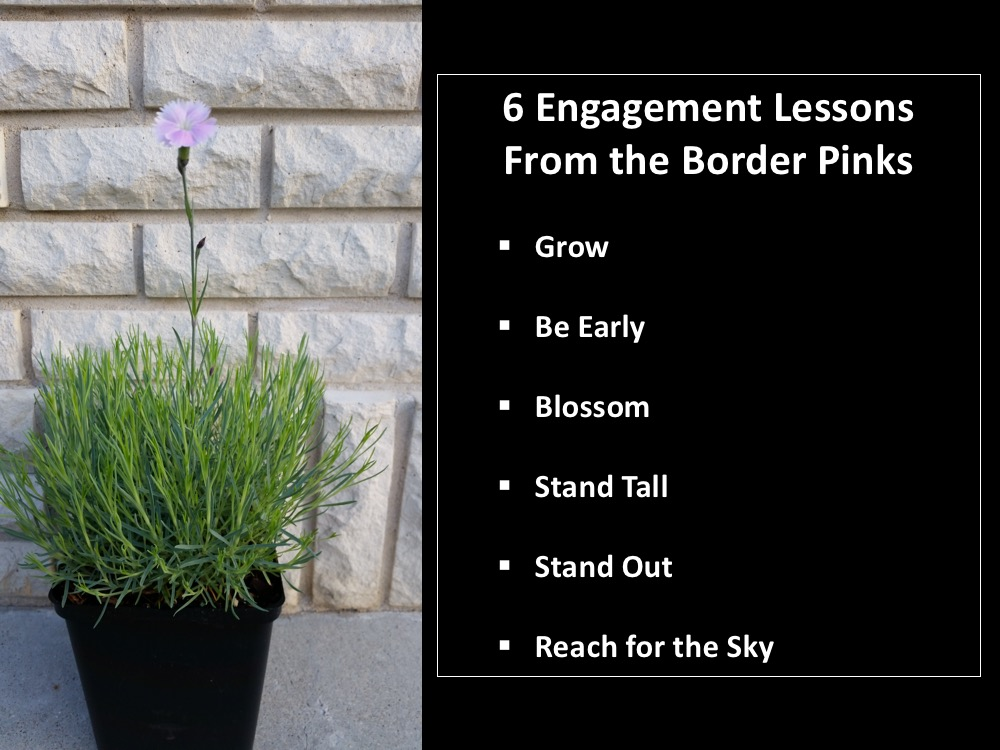 Engagement Lessons from the Border Pinks