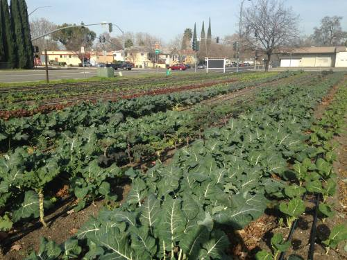 Center for Land-Based Learning's Urban Farm in West Sacramento