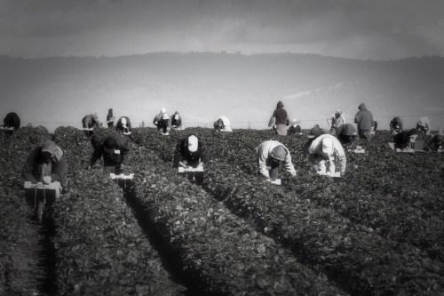 Farm-Worker-BW