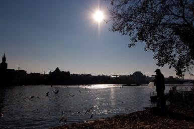 An old man feeds seagulls at the Vltava riverside