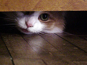 Image result for shy cat