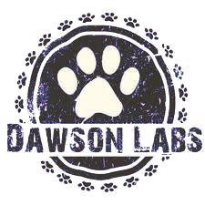 dawsonlabs3 - Best Lab Breeders in Missouri | English Labrador Puppies | Chocolate Labs