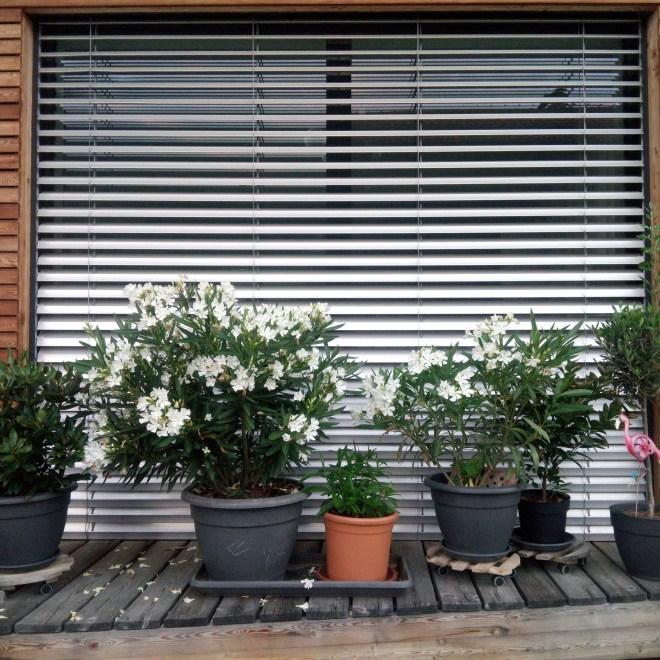 fixverglasung, fenster, topfpflanzen, gießen